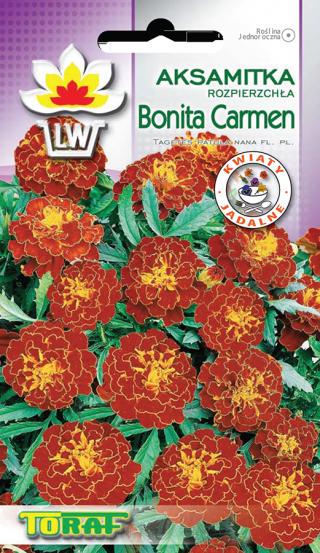 Picture: Aksamitka rozpierzchła Bonita Carmen